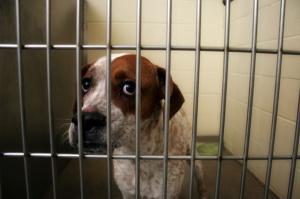sad-scared-dog-at-dog-pound