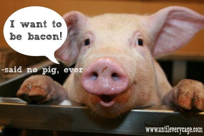 pigs bacon text